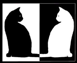 Black-and-white-cats