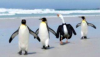 Penguin imposter