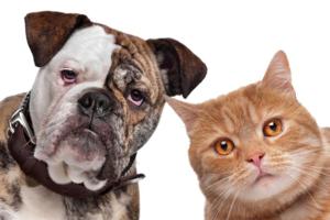 DPC Cat & Dog 39033088
