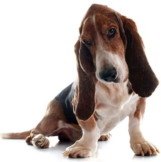 DPC nice dog S 78032045
