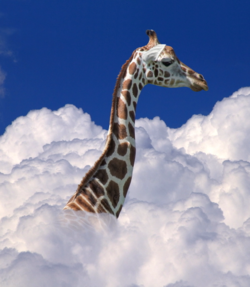 DPC Giant Cloud Girafe S 100019673