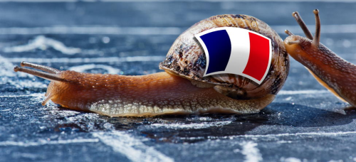 AdS DPC Snail french flag SS 73162555
