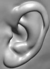 Ear_3